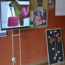 Maquetes, vídeos e animações, da turma de Fisiologia Animal do Curso de Medicina Veterinária